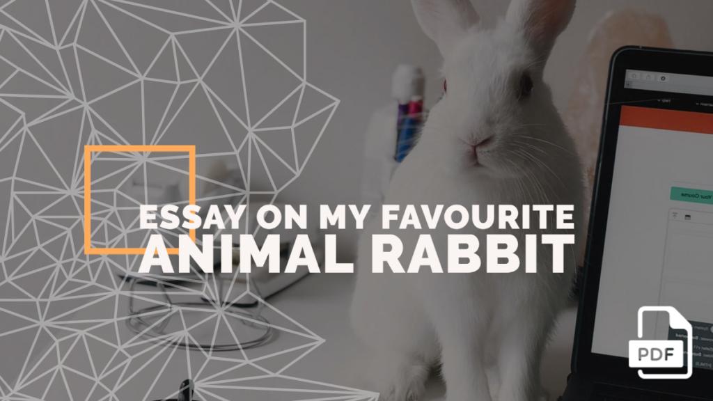 rabbit essay feature image