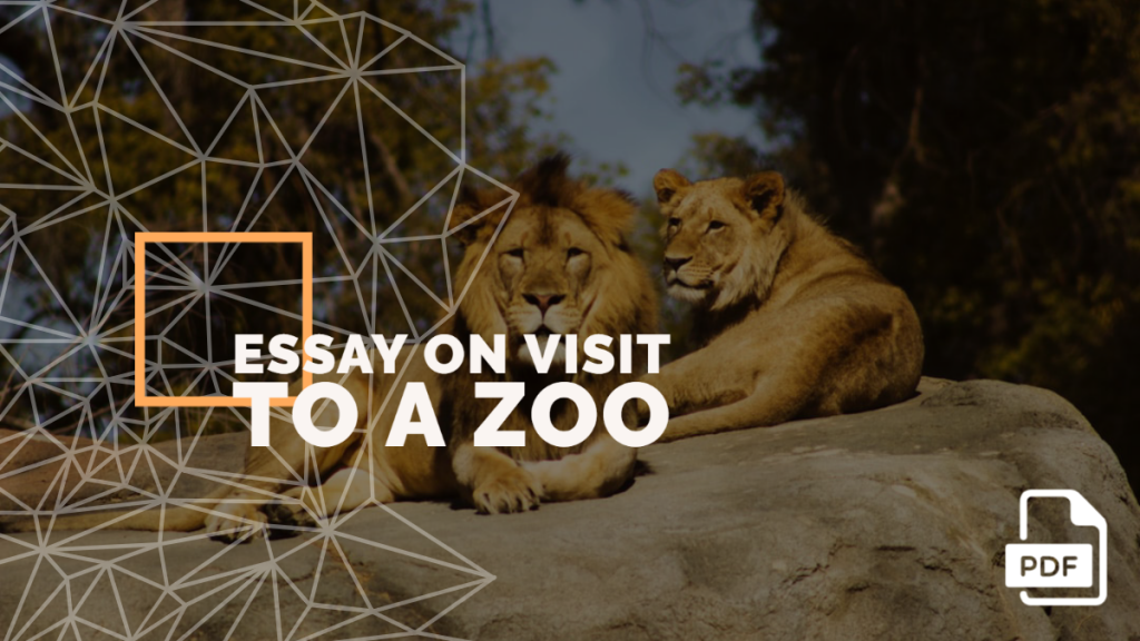 Visit to a zoo feature image