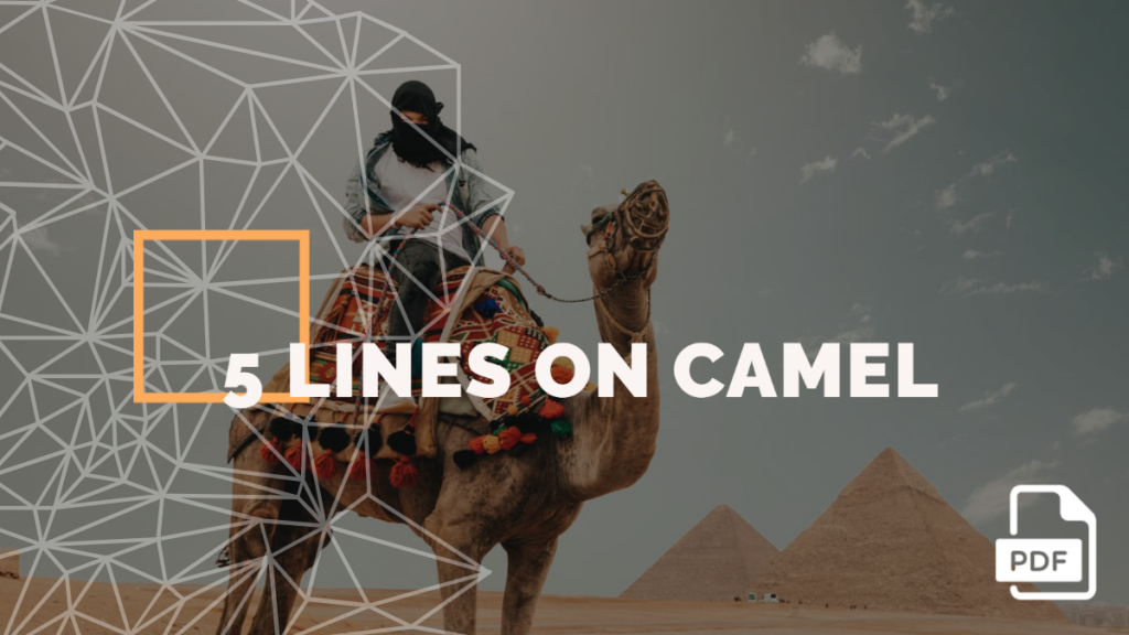 5 lines on Camel feature image feature image