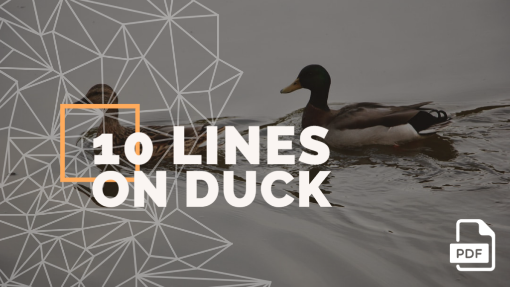 10 lines on duck feature image