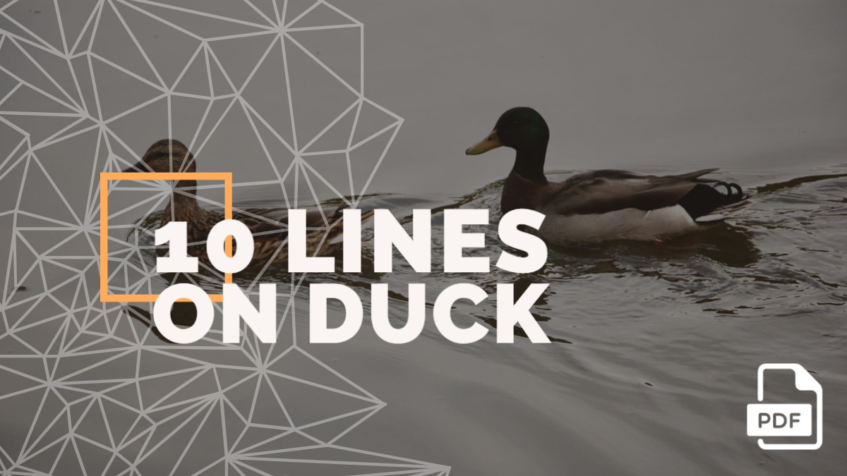 10 Lines on Duck [With PDF]