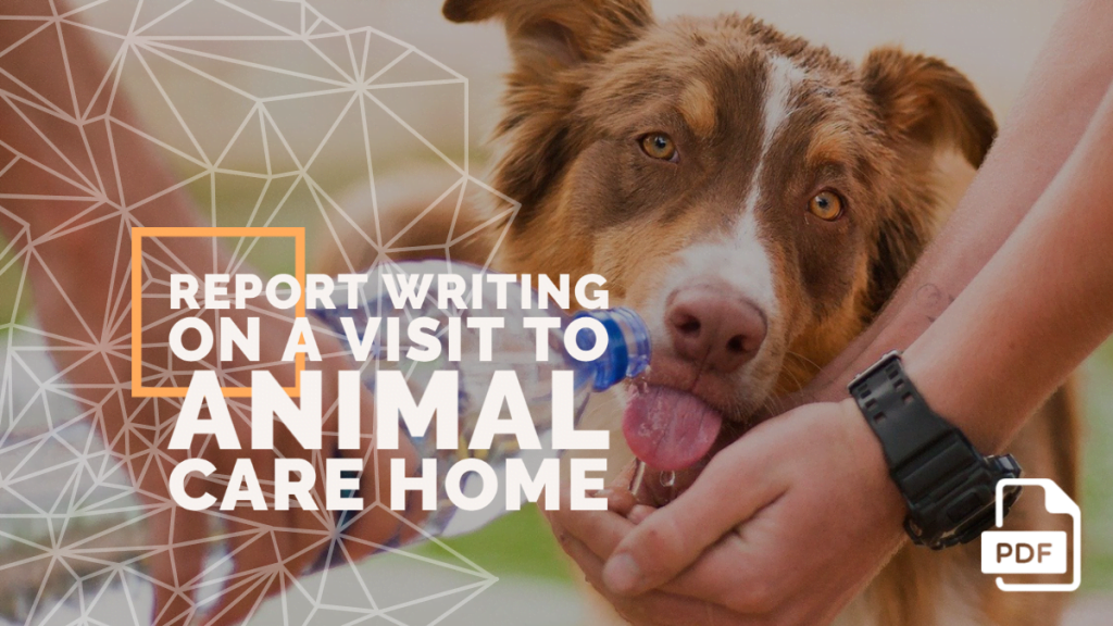 feature image of Report Writing on a Visit to Animal Care Homeotball Match You have Witnessed
