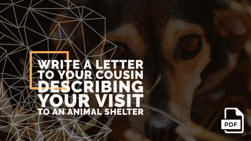 Feature image of Letter to Your Cousin Describing Your Visit to an Animal Shelter