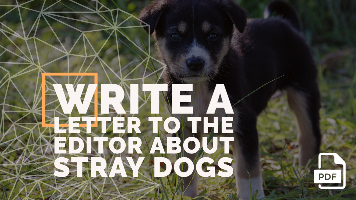 Write a Letter to the Editor about Stray Dogs
